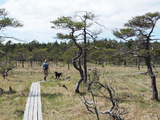 Naturreservat Gotland